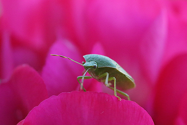 Hudson Valley Stink Bug Invasion Begins 5 Things You Can Do