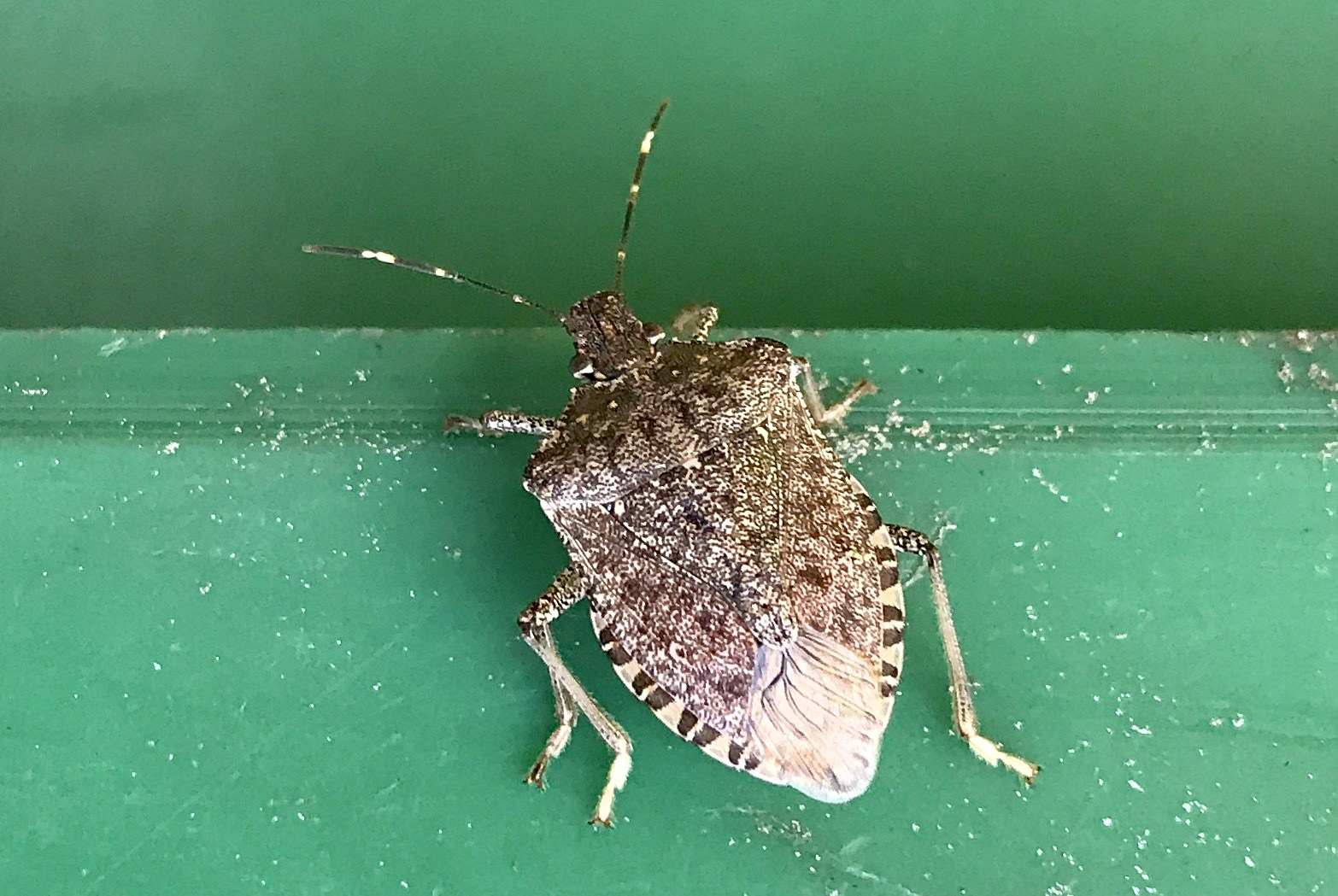 7 creative new ways to get rid of stink bugs for good