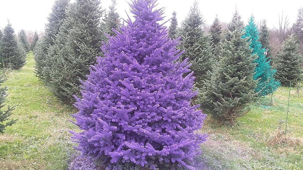 are colored christmas trees coming to the hudson valley