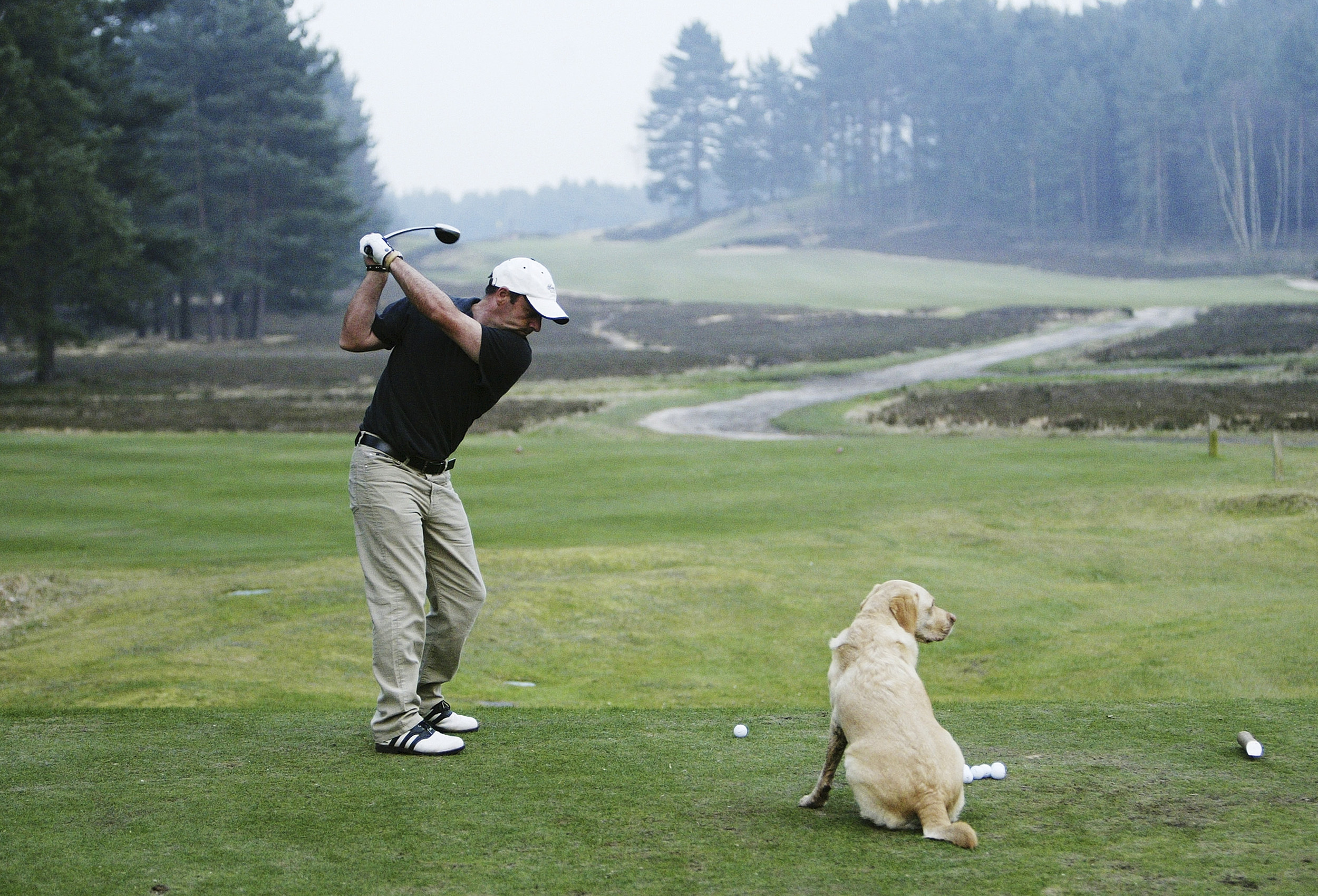 Dog and Golfer